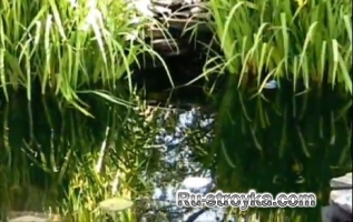 Расслабляющая пруд