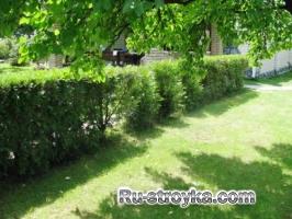 Папоротники для вашего сада