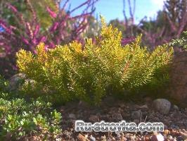 Садовые композиции из красивоцветущих кустарников