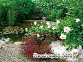 Растения для водоёма