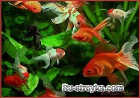 Рыбки в садовом пруду