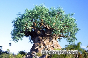 Краткая характеристика основных пород деревьев и их применение.