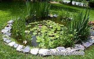 Растения для мини-водоема.