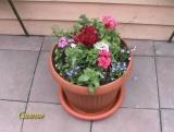 Садовый дизайн 1 (Блок 1)