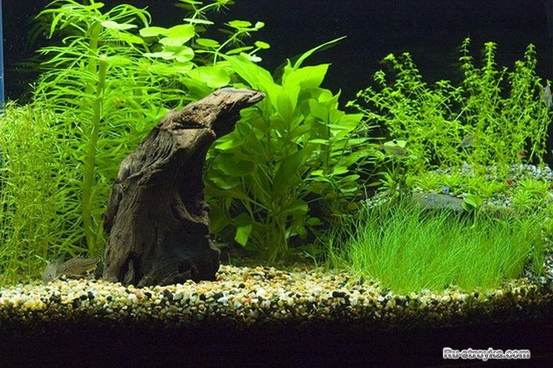 Декор аквариума своими руками фото