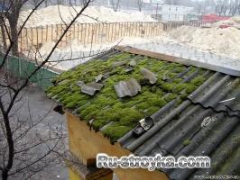 Что может расти на крыше.
