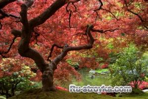 Японские сады.