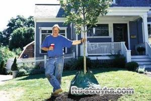 Как посадить дерево.
