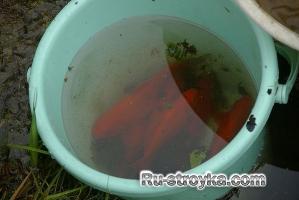 Как сделать пруд для рыбы.
